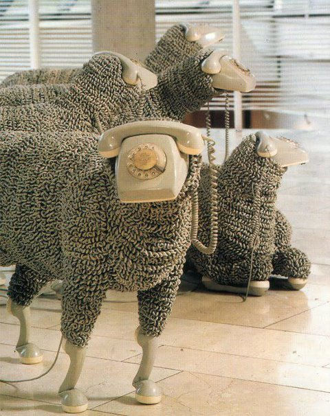 love these sheep
